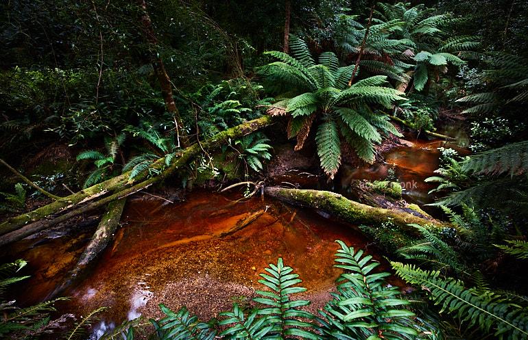 Tasmania Photo Tour with Adam Monk-06
