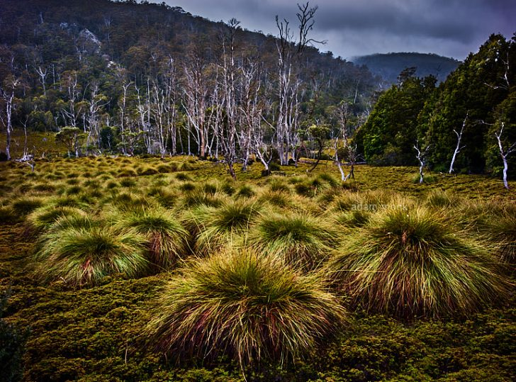 Tasmania Photo Tour with Adam Monk-09
