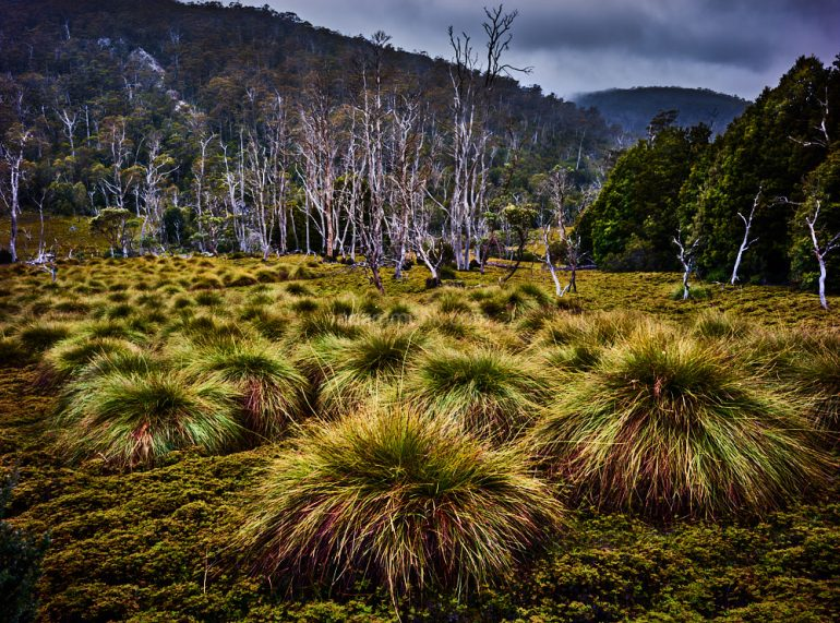 Tasmanian Photo tour-12