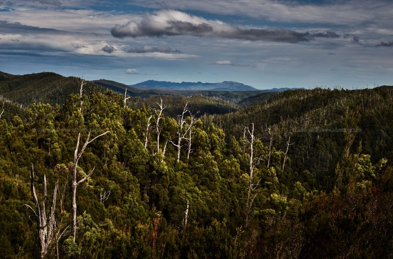Tasmania Photo Tour, Tarkine Wilderness
