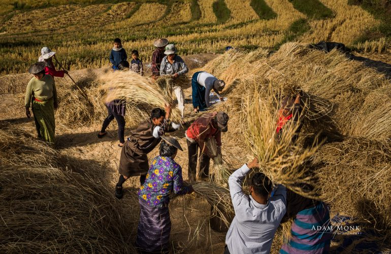 Bhutan photo tour Rice threshing after harvest