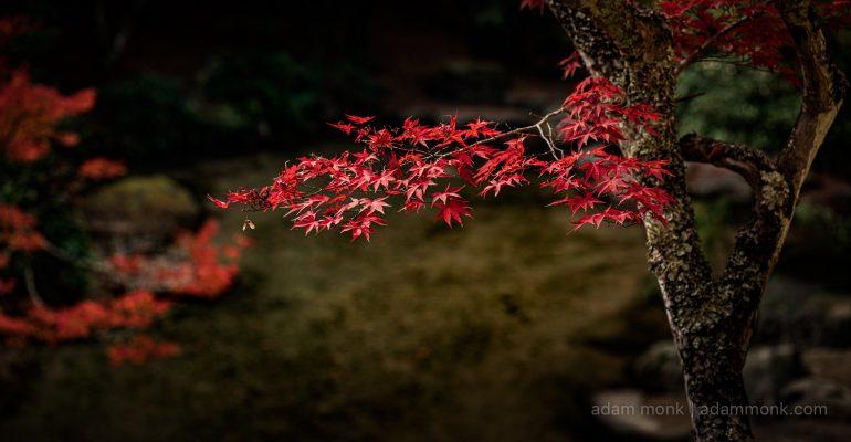 Japan Autumn Photo tour