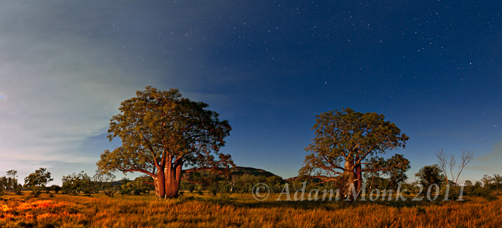 Kimberley Panoramic Image of Firelit Boab trees and the star filled night sky at Jarlmadangah Aboriginal Community, Kimberley Region of Western Australia